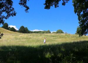 Wiese im Wienderwald